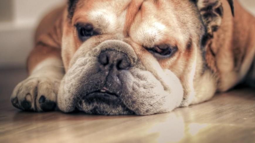 Мэром городка вКентукки выбрали собаку