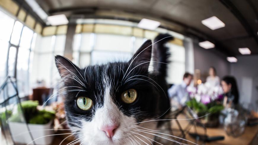 Кот Эрнест вернулся домой после 9-летней прогулки
