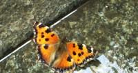 Порхающие цветы: в Минске показали самых красивых бабочек