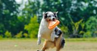 Мода на спорт: в Петербурге открыли фитнес-клуб для собак