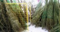 Елочка, лети: чемпионат по метанию новогодних деревьев