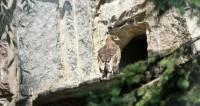 В Московском зоопарке вновь открылась Скала хищных птиц