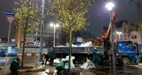 В Москве высадили двухтысячное дерево по программе «Моя улица»