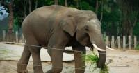 В таиландском зоопарке слон растоптал насмерть смотрителя