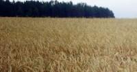 В Дании создали «Биологический дом» из сельхозотходов