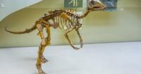 Ученые раскрыли новые обстоятельства вымирания динозавров
