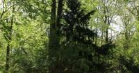 В лесу под Петербургом нашли заросшую мхом спортивную «Хонду»