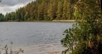 Тисовой памятник древней природе
