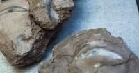 Могильник на Алтае рассказал о диалоге культур в эпоху неолита