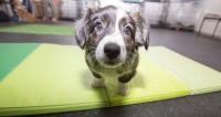 Собака в доме на треть снижает риск преждевременной смерти