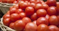 Турция отправила в Россию первую партию томатов