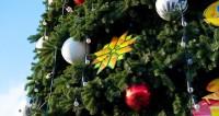 В Японии установили самую высокую в мире живую «рождественскую ель»