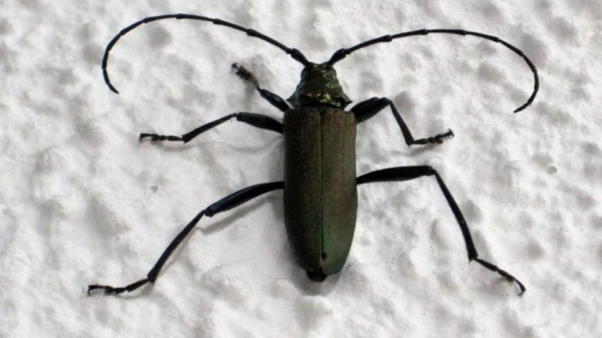 Ученые создали зрячего жука с тремя глазами