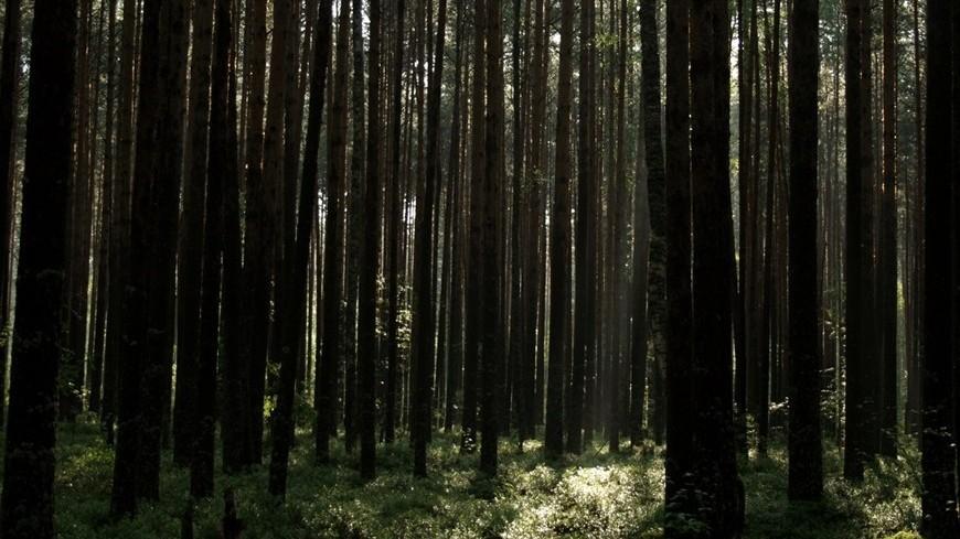 Через леса и болота Подмосковья проложат туристические тропы
