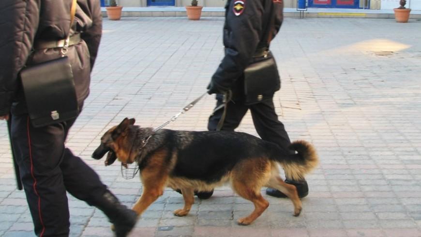 В «заминированной» Останкинской башне не обнаружили бомбу