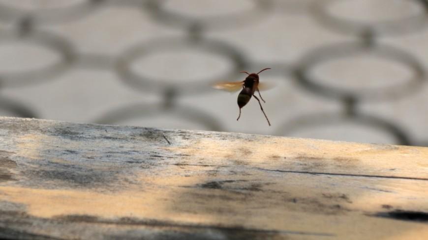 Ученые обнаружили «левшей» среди пчел