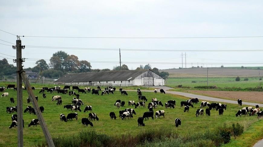 Не запугали: маленькая птичка дала отпор стаду разъяренных коров