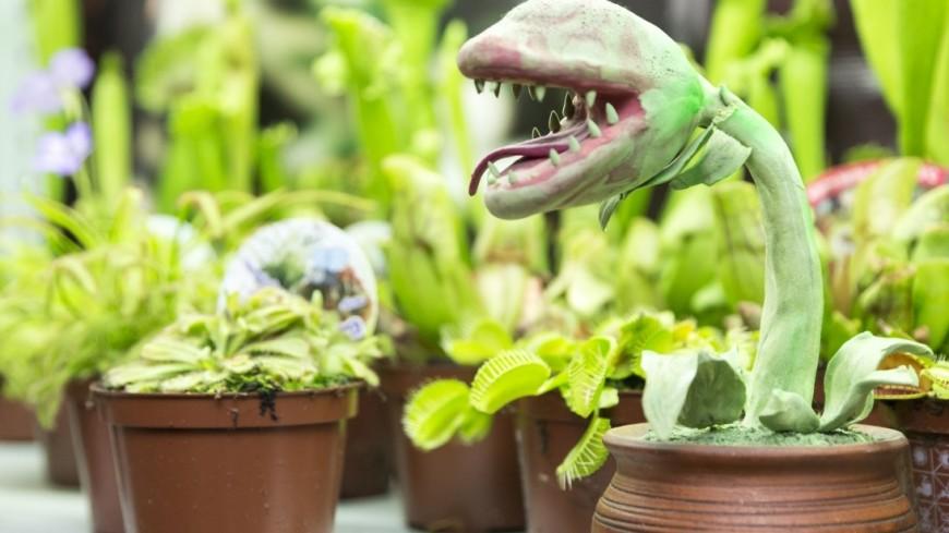 Американцы работают над созданием растений-шпионов
