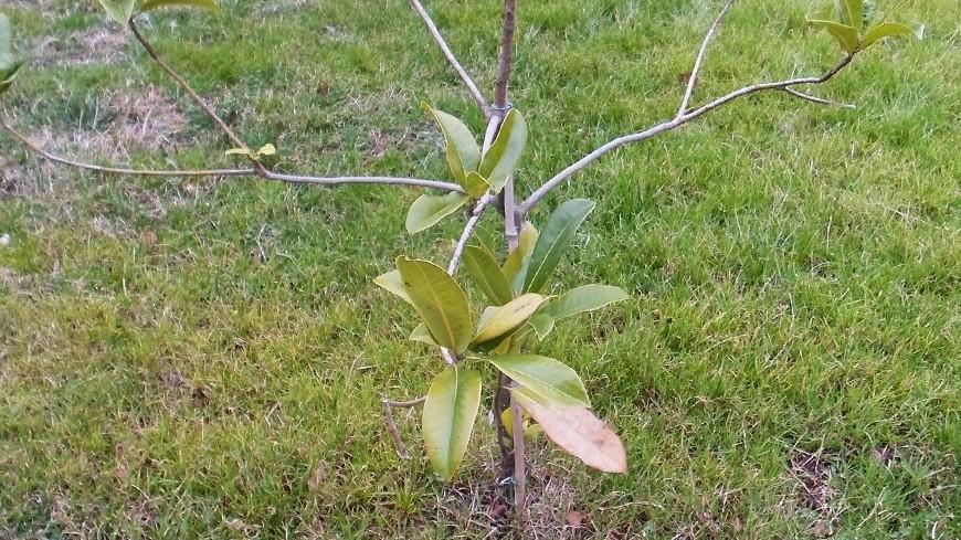 На Садовом кольце до конца года высадят 2 тыс. деревьев
