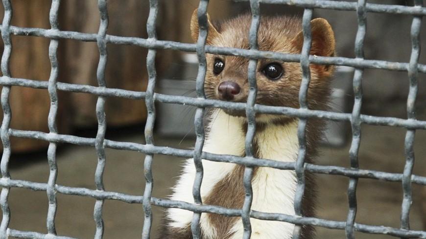 В приморском зоопарке двое мужчин напали на животных