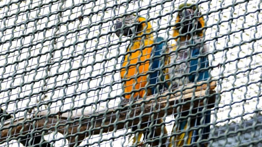 Контрабандисты Индонезии пытались провезти 125 попугаев в дренажных трубах