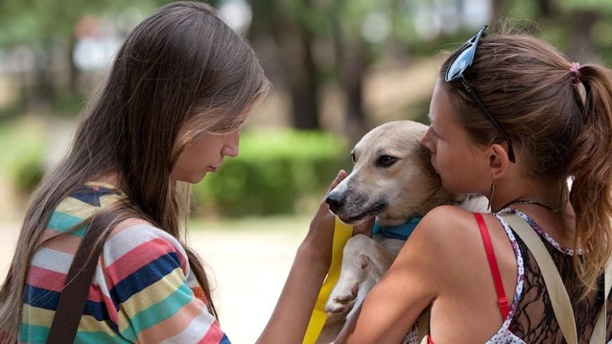 Ученые: собаки позитивно  сказываются наздоровье человека