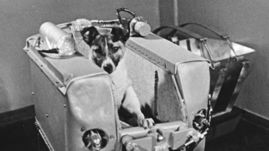 Первая в космосе: 60 лет полету собаки Лайки