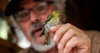 Нота за нотой: ученые раскрыли тайну изучения песен певчими птицами