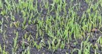 Секреты ландшафтного дизайна: как подготовить газон к зиме