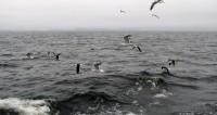 Взрыв в зоне исчезновения субмарины «Сан-Хуан» был мощнее 100 кг тротила
