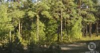 С начала этого года около 870 человек потерялись в лесах Подмосковья