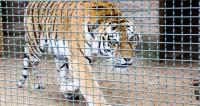 Пять причин посетить Минский зоопарк