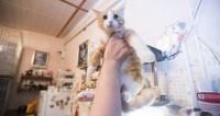 Подушка с хвостиком: котикам нашли электронную замену