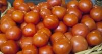 Правительство утвердило возвращение турецких томатов в Россию