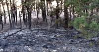 Спасли деревню от огня, а сами погибли. Подробности трагедии в Бурятии