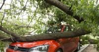 Ураган валит деревья в Волгограде: пострадали трое