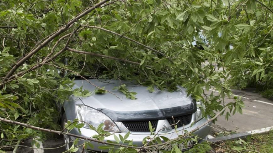 ВПольше есть погибшие урагана: два человека