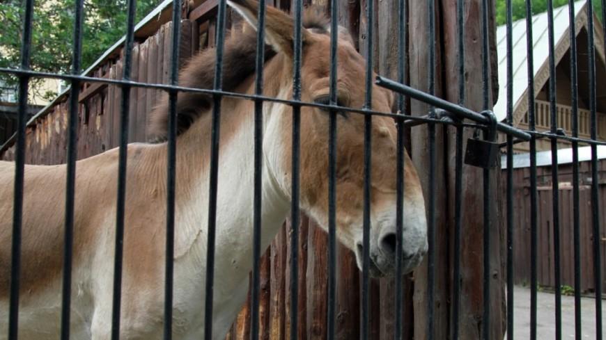 ВСША вывели лошадь, как вмультике Disney