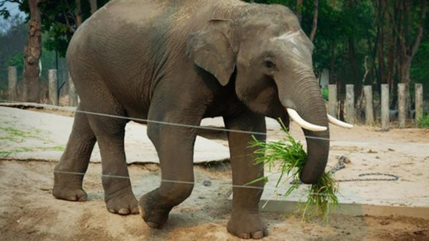 Слон атаковал лагерь беженцев-рохинджа в Бангладеш есть жертвы