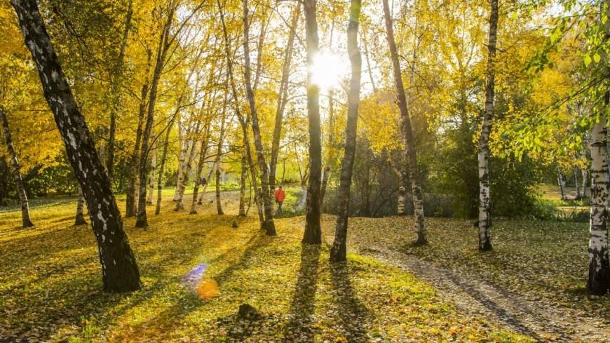 Золотая осень в парке