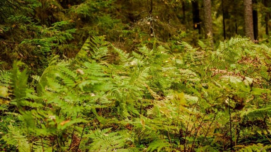 Древнейшие европейские папоротники находятся под угрозой исчезновения— Экологи