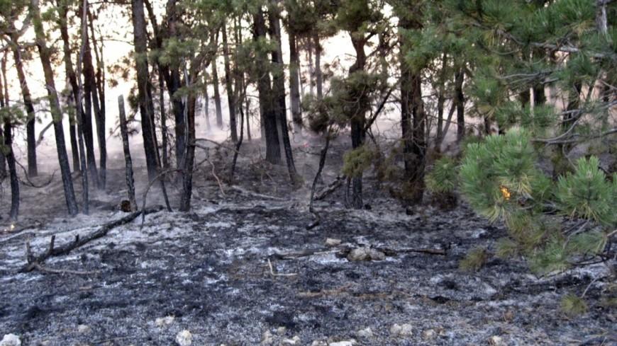 Неменее 130 гектаров леса потушили засутки вПриморье