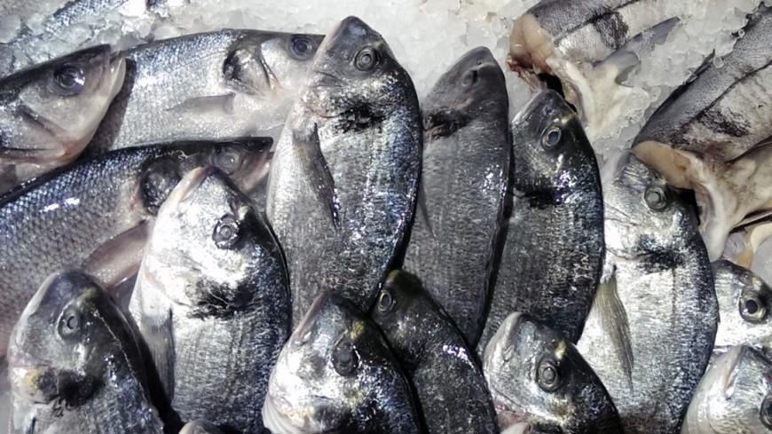 СМИ: Европейцы и американцы, покупая рыбу в магазинах, помогают КНДР