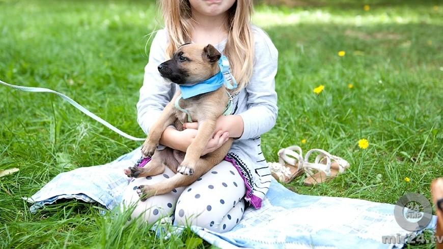 Домашние собаки могут защищать малышей от заболеваний