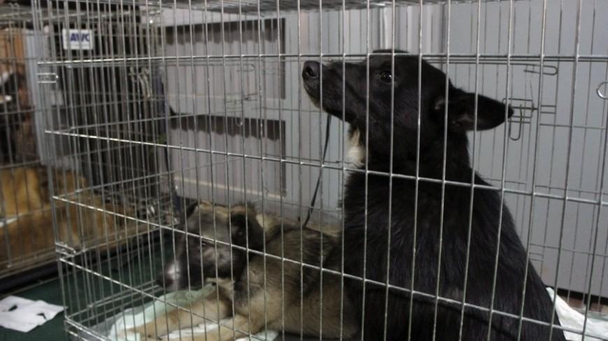 В приюте под Тверью собак морили голодом и усыпляли ради денег