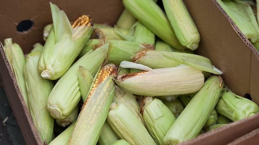 Ноу-хау армянских студентов: пластик из кукурузы и арматура из магмы