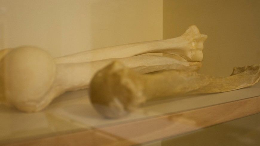 Вцентральной части Москвы отыскали кости 50-летней давности