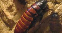 Кошмар большого города: как разводят экзотических насекомых