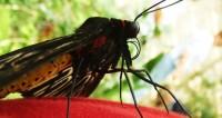 Ученые: Ураганы в Мексике привели к массовому вымиранию бабочек-монархов