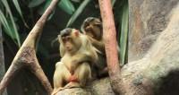СМИ: При закупке обезьян в РАН похитили около полумиллиарда рублей